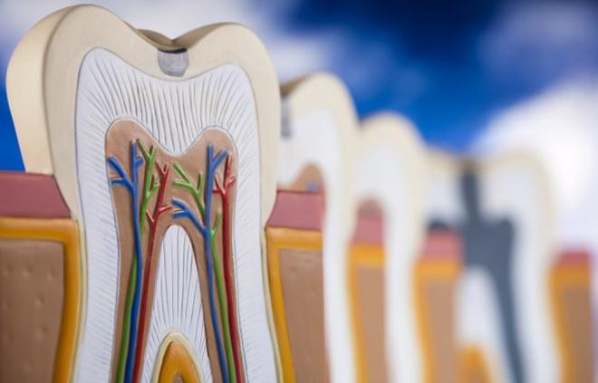 Пломбирование и лечение каналов зуба — методы и распространённые ошибки