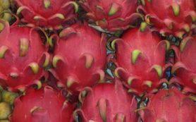 Рецепт фруктового салата из дракон-фрукта