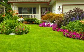 Красивый газон вокруг дома