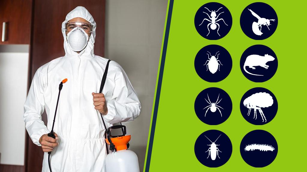 Дезинфекция от насекомых